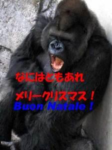 Gorilla4_6