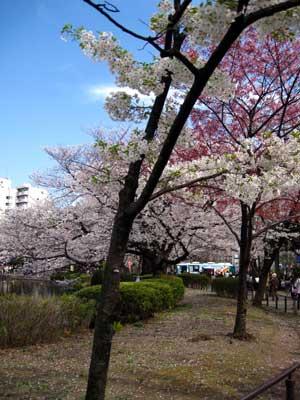 Shinomazunoike1