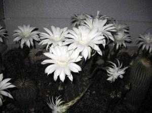Sabochan20112